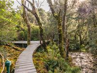 Boardwalk courtesy Matt Glastonbury - Peppers Cradle Mountain Lodge