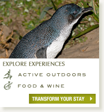 Explore experiences at Peppers York Cove