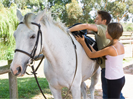 Horse trekking available in the Hunter Valley