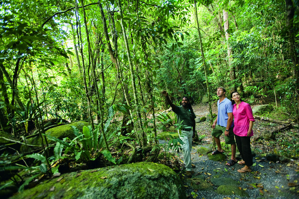 Explore the rainforest and turtle viewing in Port Douglas