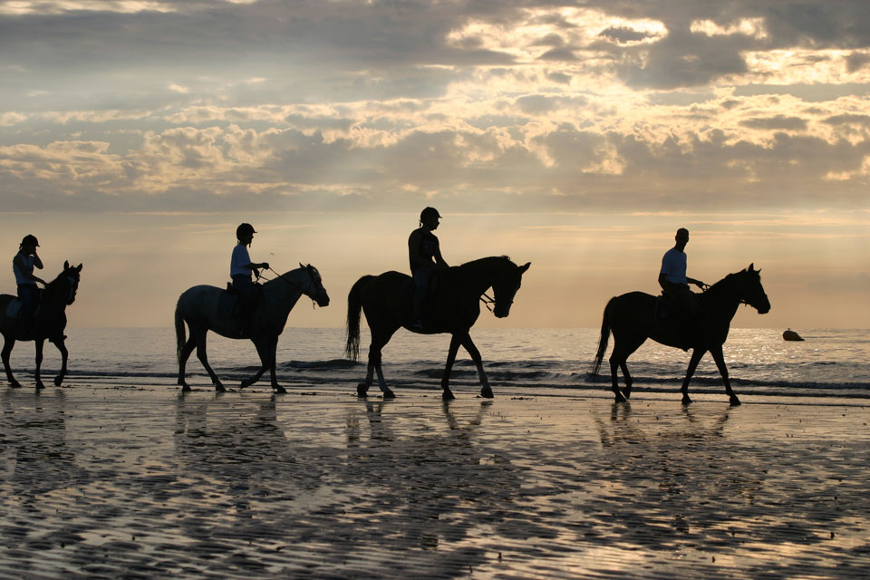 Hire horses for horse trekking and riding trails close to Broadbeach
