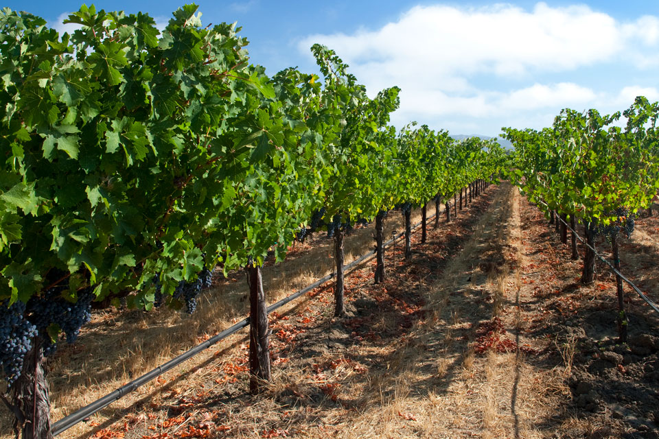 Vineyard and wine tours around Bowral area